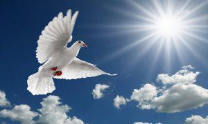 Pentecost Dove